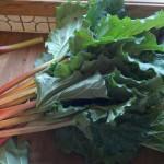Rhubarb to prepare