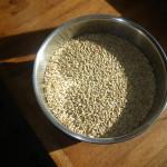 dry malt