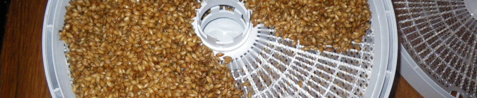 Grain in the dehydrator